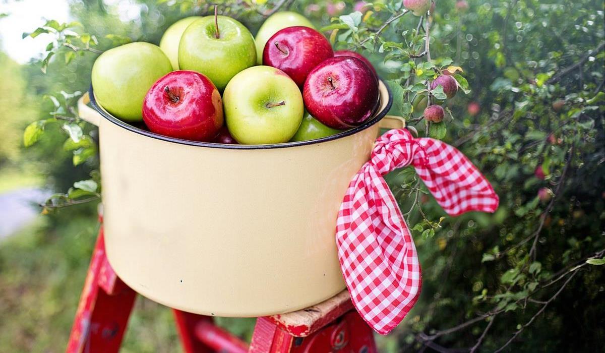 inne właściwości octu jabłkowego