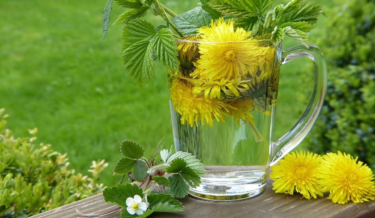 Sięgnij po zioła ograniczające apetyt
